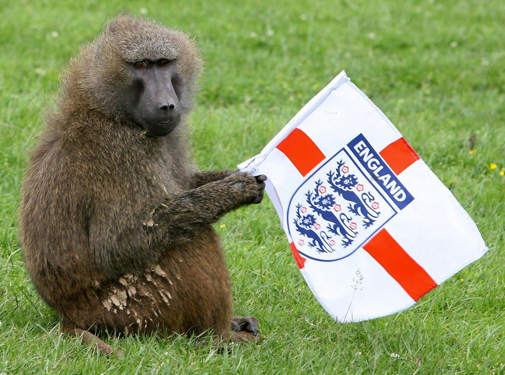 Windows Up Baboons At Uk Safari Park Arm Themselves With Knives Chainsaw Nz Herald